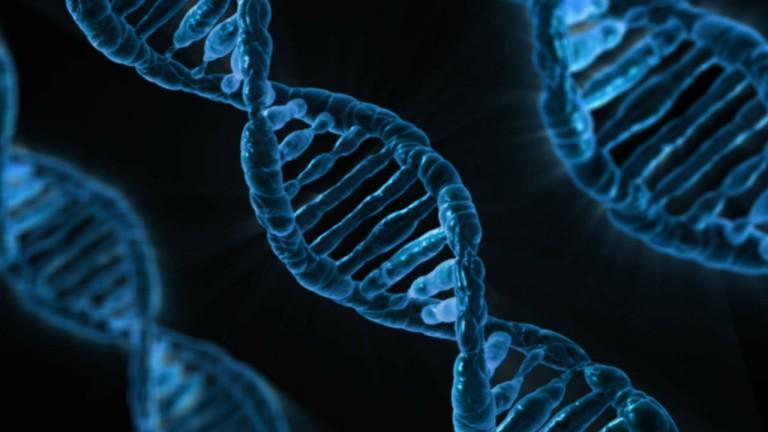 DNA - Leptin Hormon