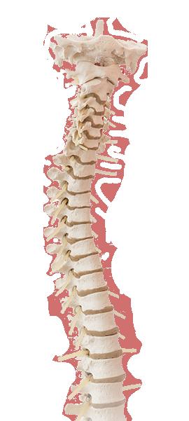 Jetzt Rückenschmerzen loswerden!