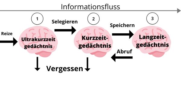 Ablauf des Gedächtnis Vorgangs in 3 Schritten, Infografik
