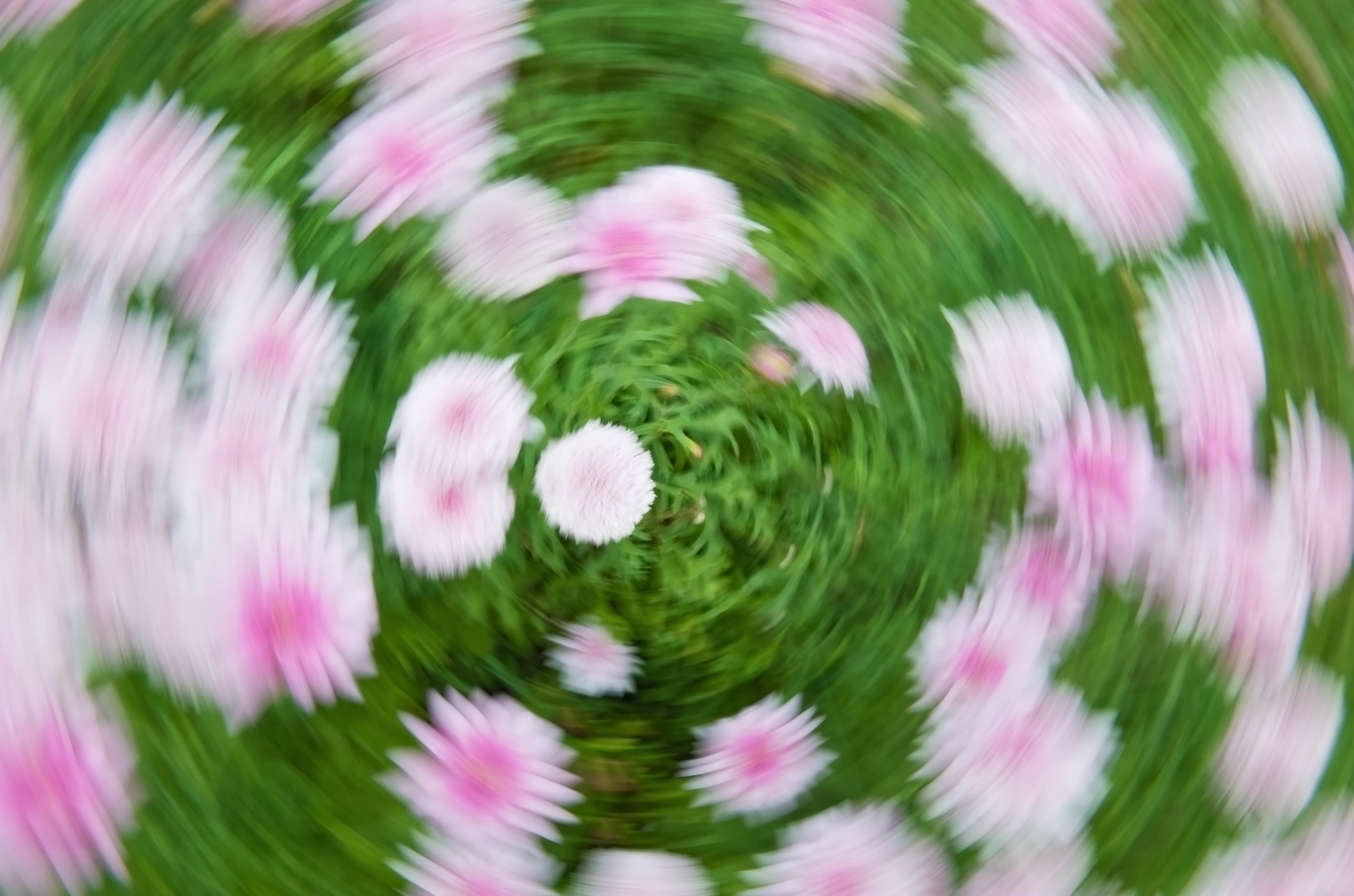 Schwindel verschwommene Blumen
