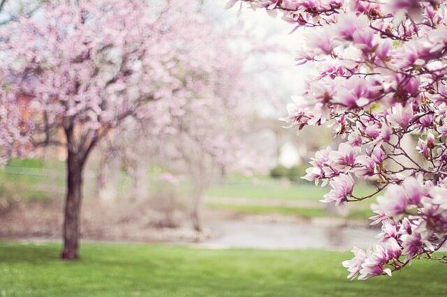 Im Frühling Gewicht verlieren