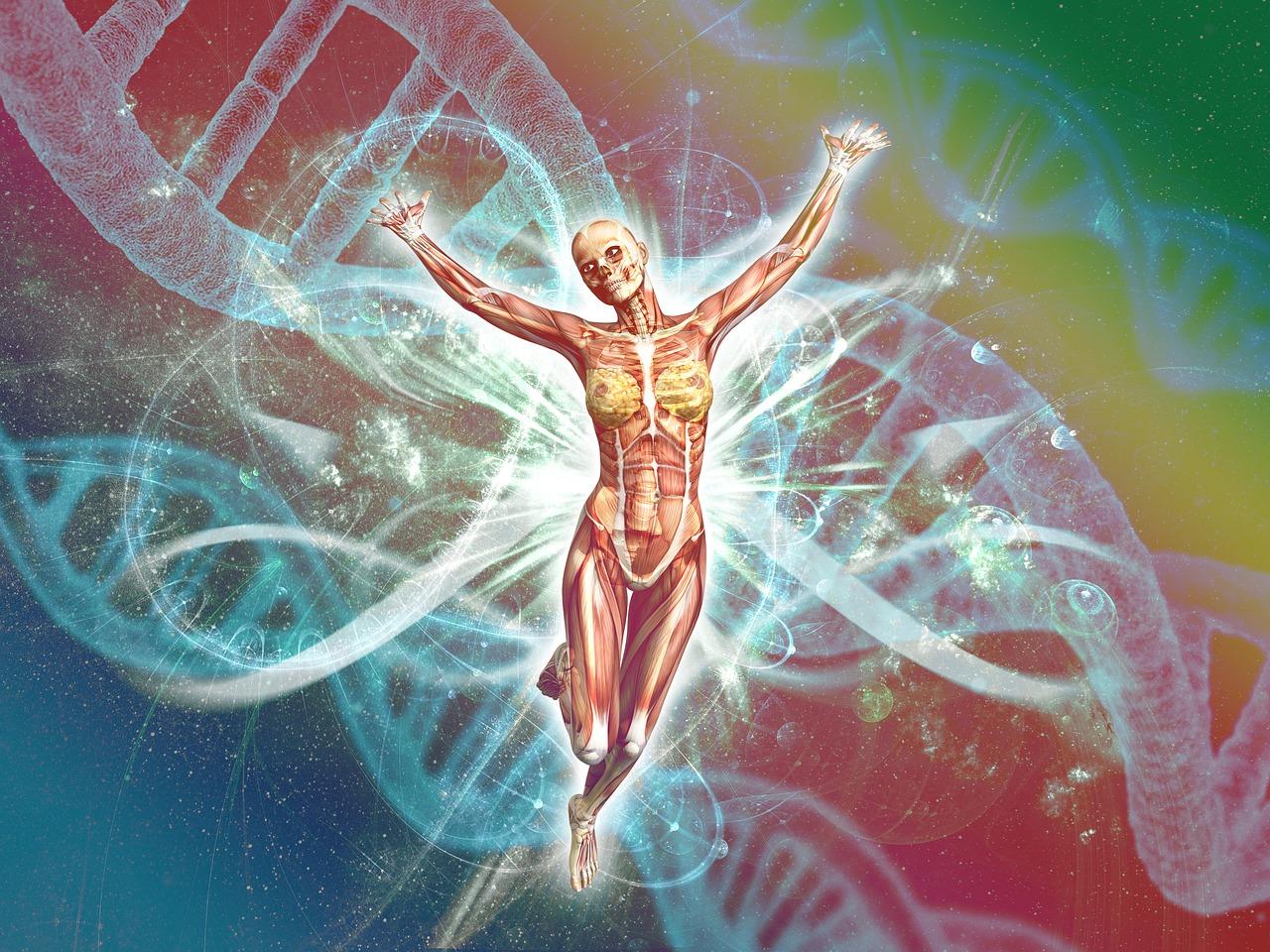 Menschliche Körper, Zellen
