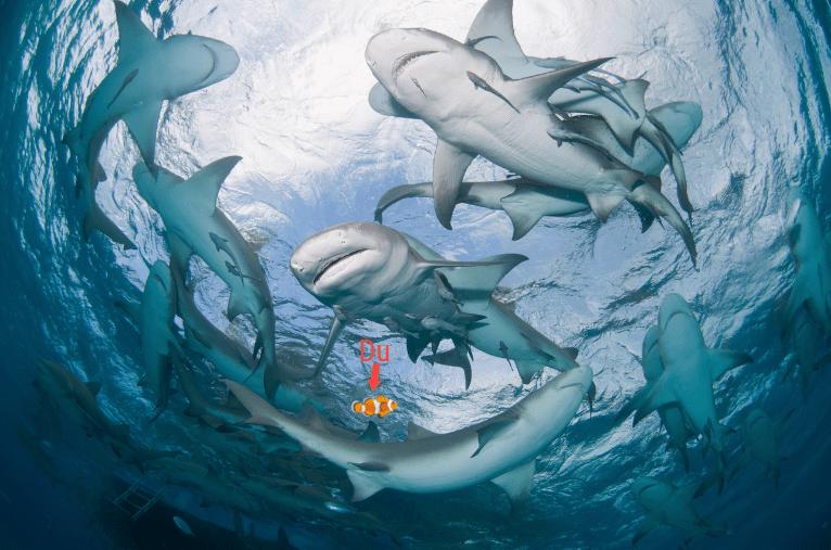 Du im Haifischbecken