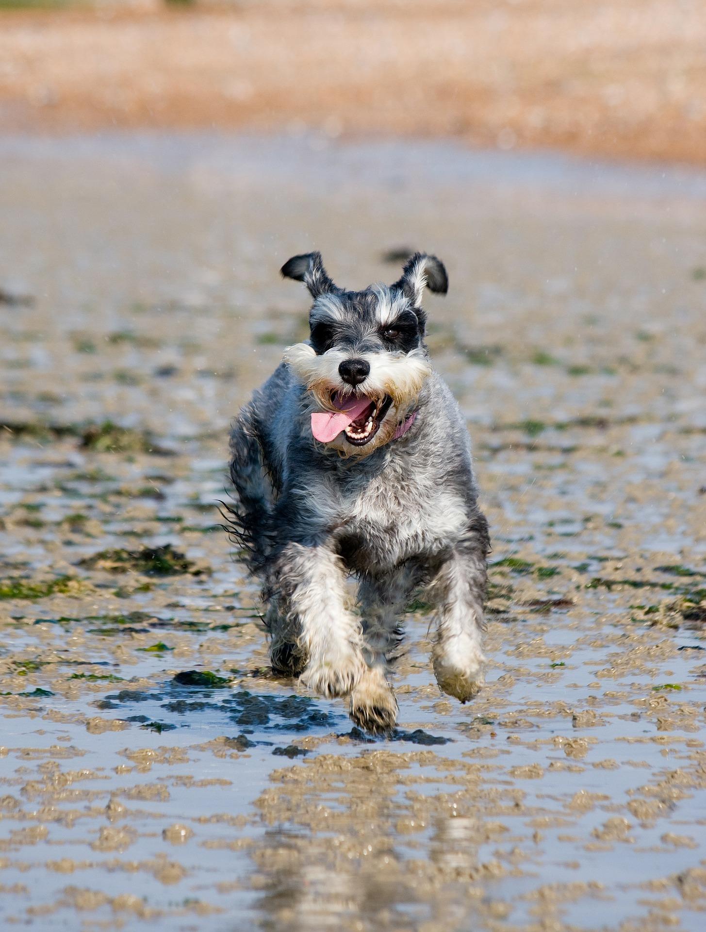 Hund hat Spass bei der Hundeerziehung