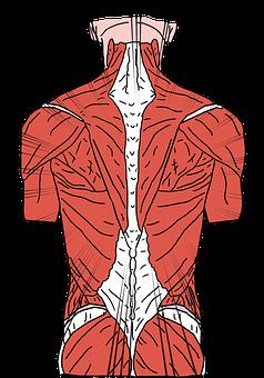 Verspannung der Rückenmuskulatur