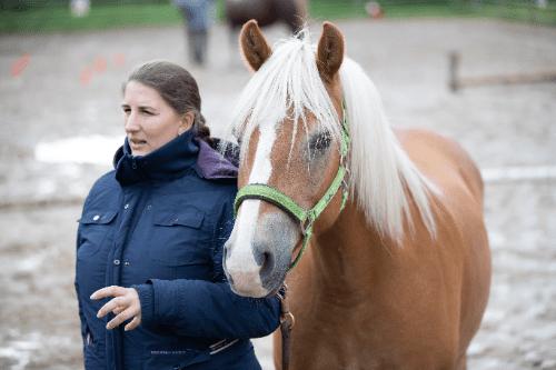 Teamentwicklung mit Pferden