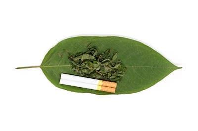 Nikotinfreie Zigaretten liegen auf einem Blatt neben Kräutertabak
