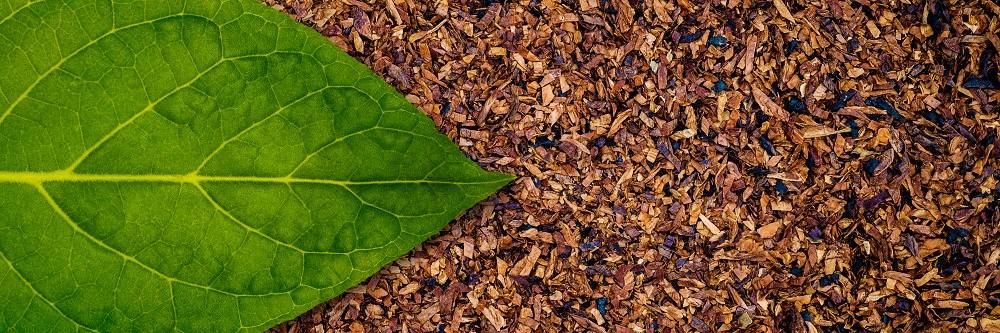 Tabakblatt und Tabak