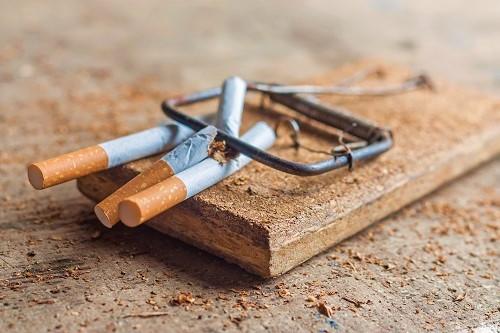 Nikotinfalle schnappt zu