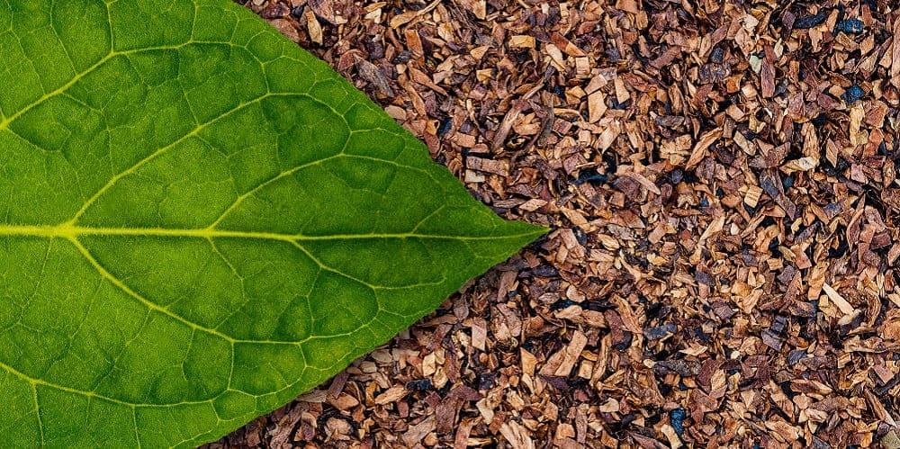 Kräuterzigaretten - So gesund ist der Tabakersatz wirklich