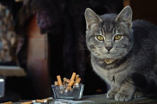 Katze sitzt neben Aschenbecher