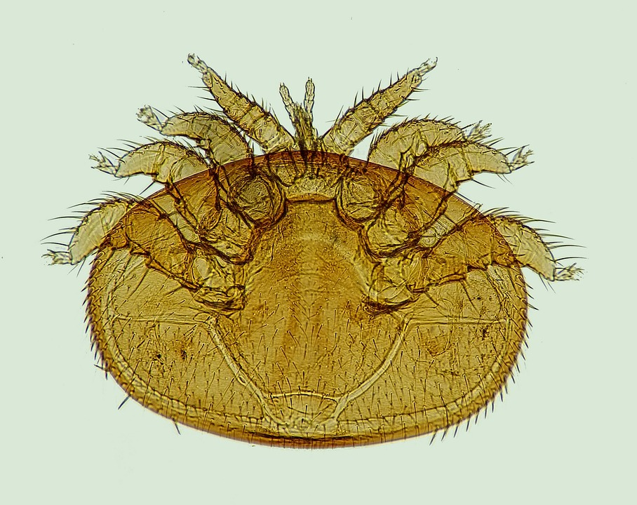 Milben sammeln sich im Bett an