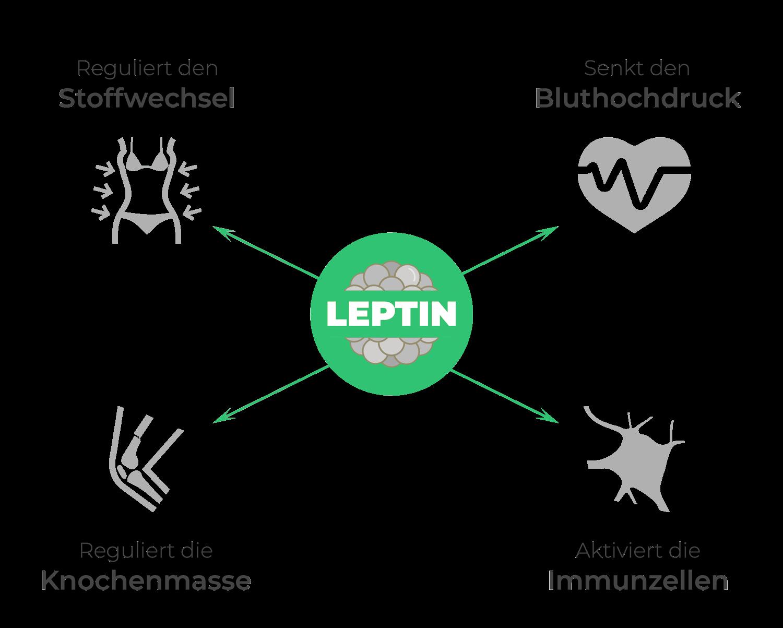 Positive Eigenschaften von Leptin