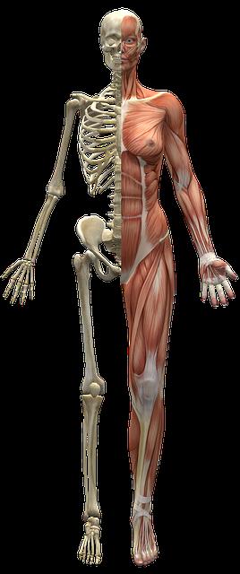 Leptin Hormon im menschlichen Organismus