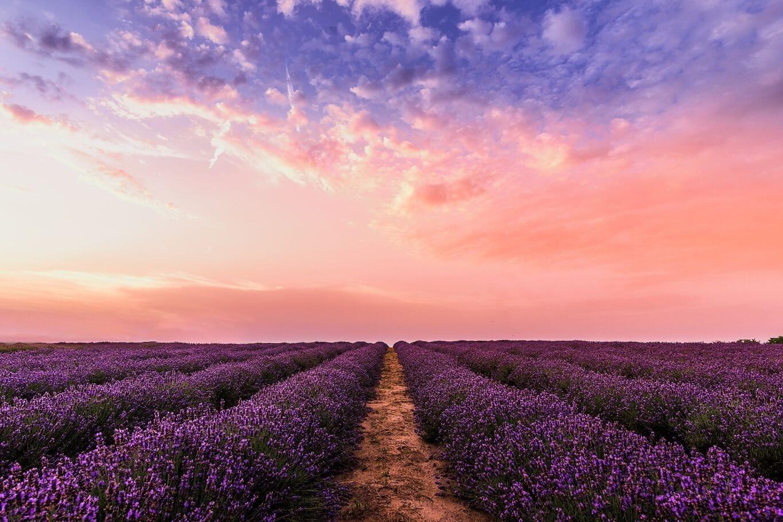 Lavendelfeld - Freiheit