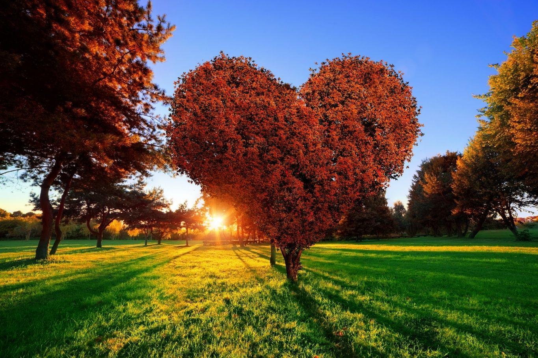 Baum Herzform - Beziehungen