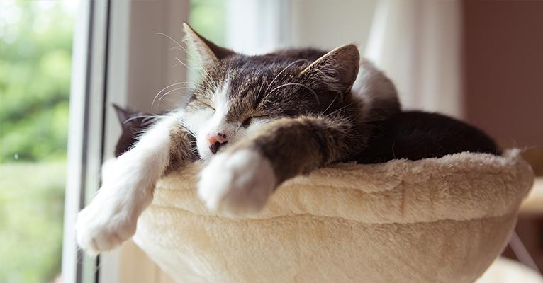Der richtige Schlaf macht uns gesund
