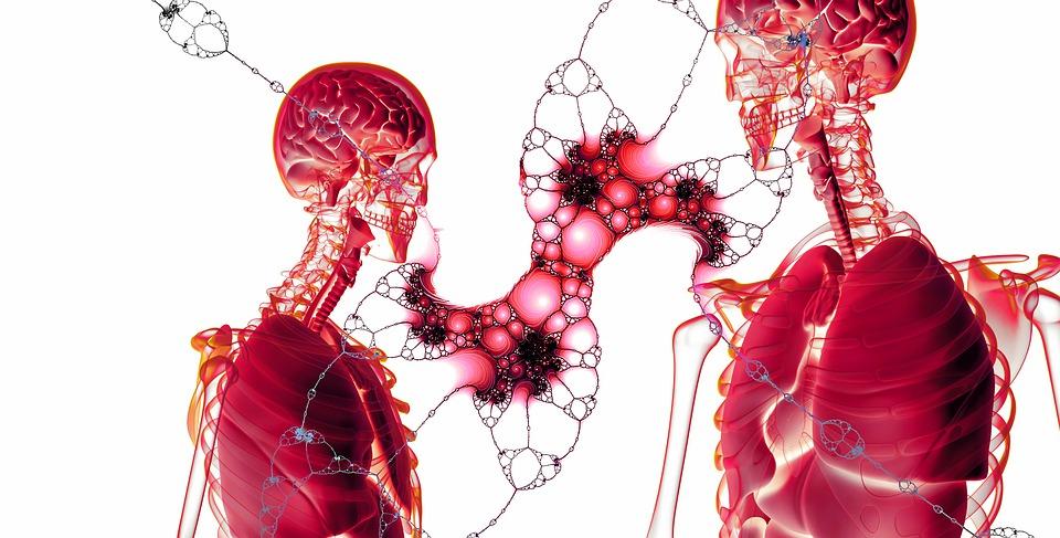 Zwei Menschliche Skelette in Rot