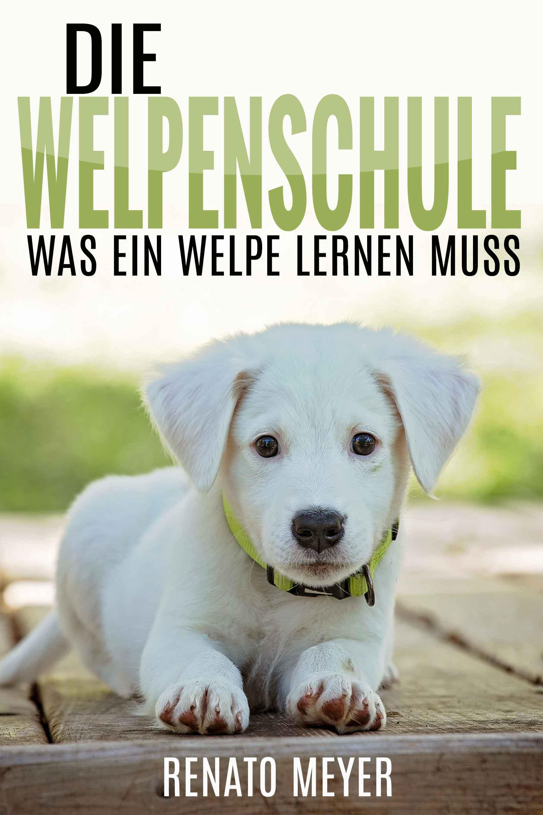 Welpenschule Cover