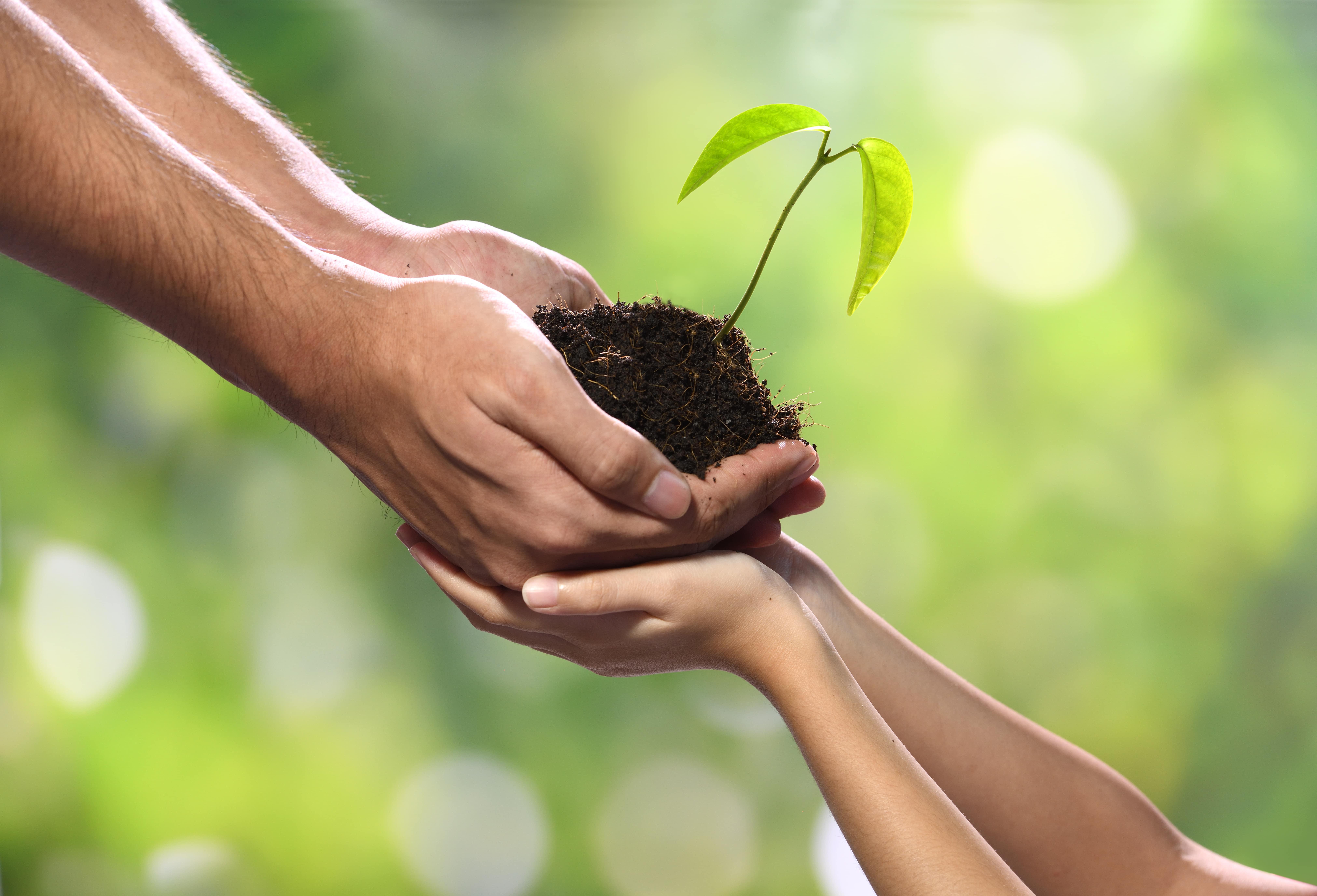 zwischen Zwei Händen Erde und eine Pflanze