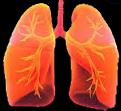 Endlich Nichtraucher gesunde Lunge