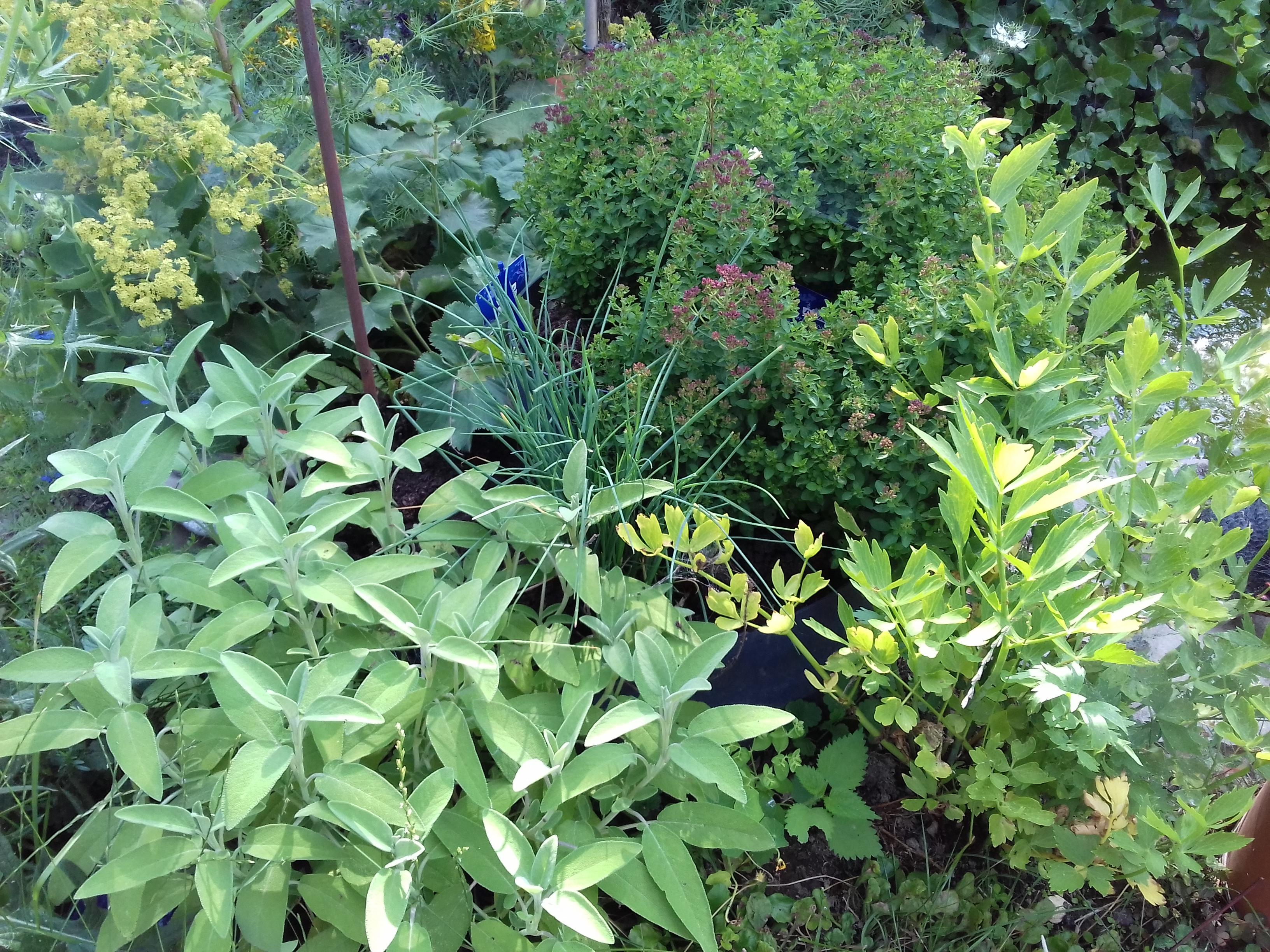Kräuter aus dem Garten
