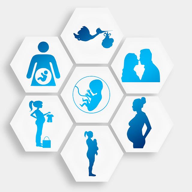 Schwangerschaftszyklus