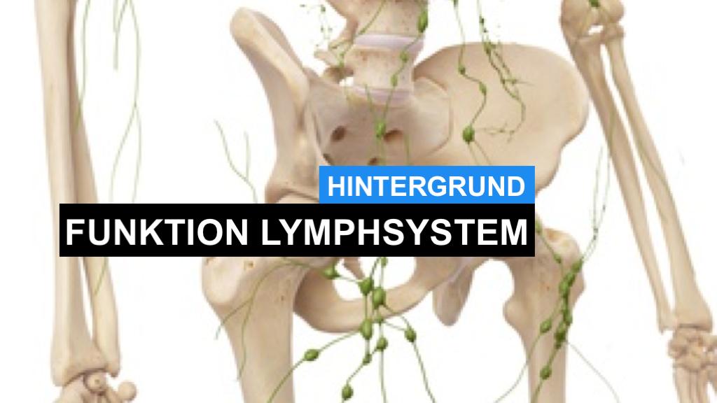 Lymphsystem - Was ist das Lymph-System und wie funktioniert es?