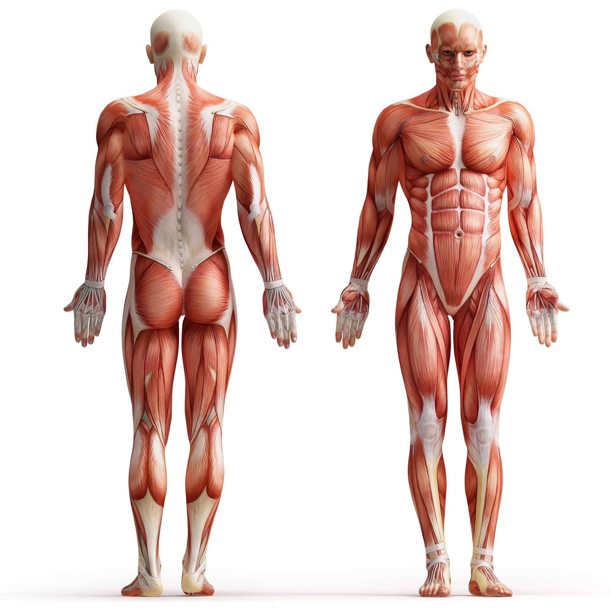 Grundubstanz Bindegewebe und Kollagen umgeben den gesamten Körper.